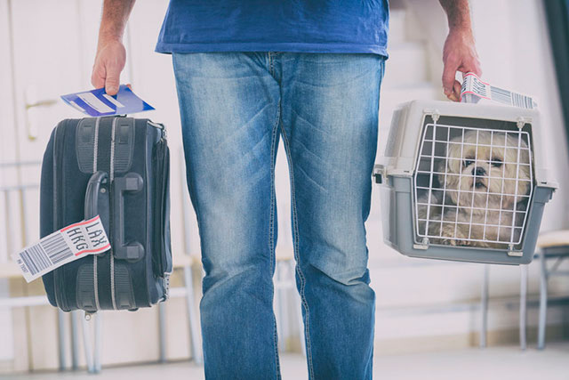 travel with pets on a private jet