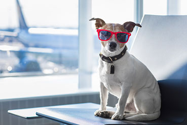 PET CHARTER TRAVEL